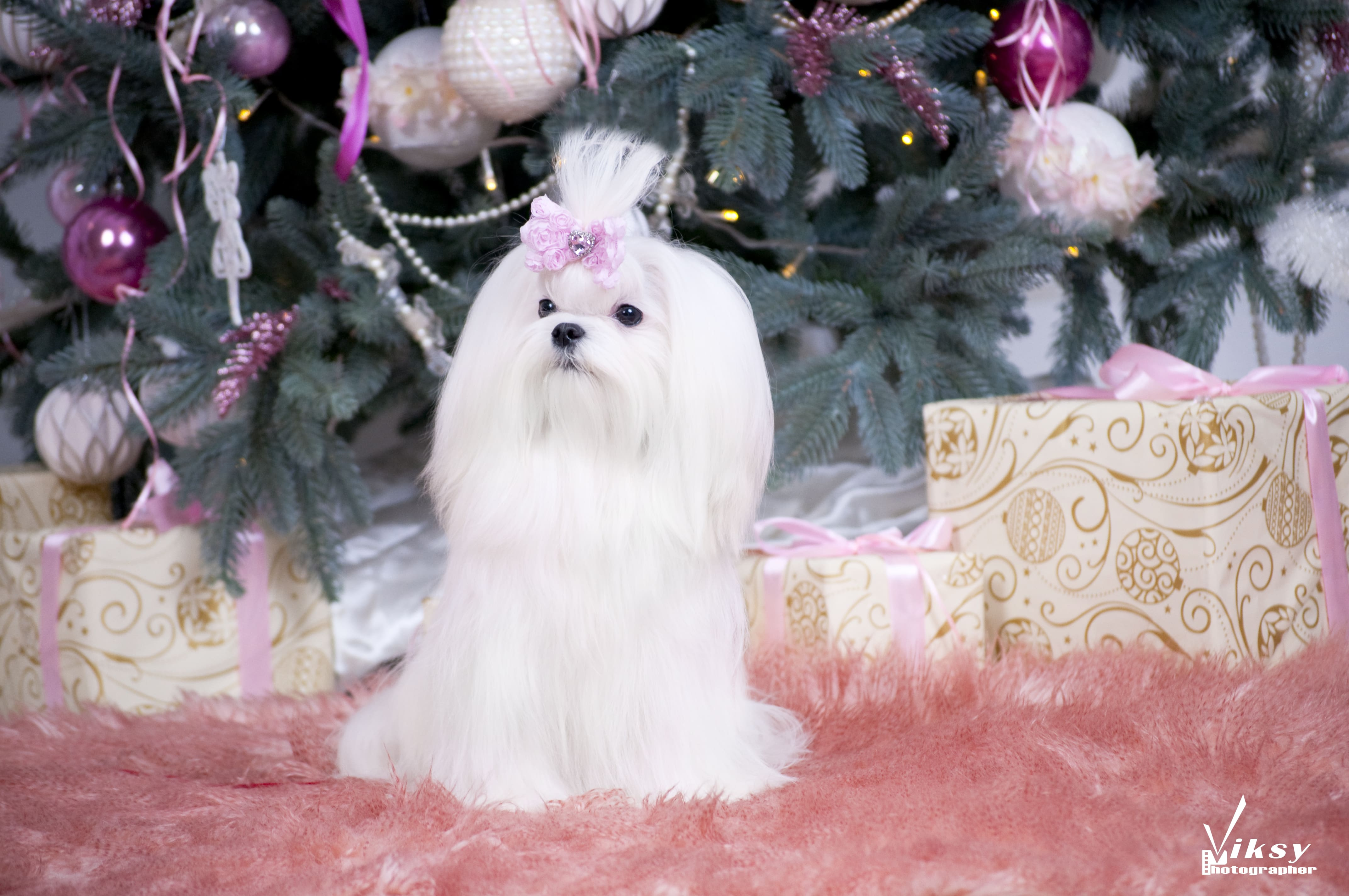 Собаковод Elegant Life